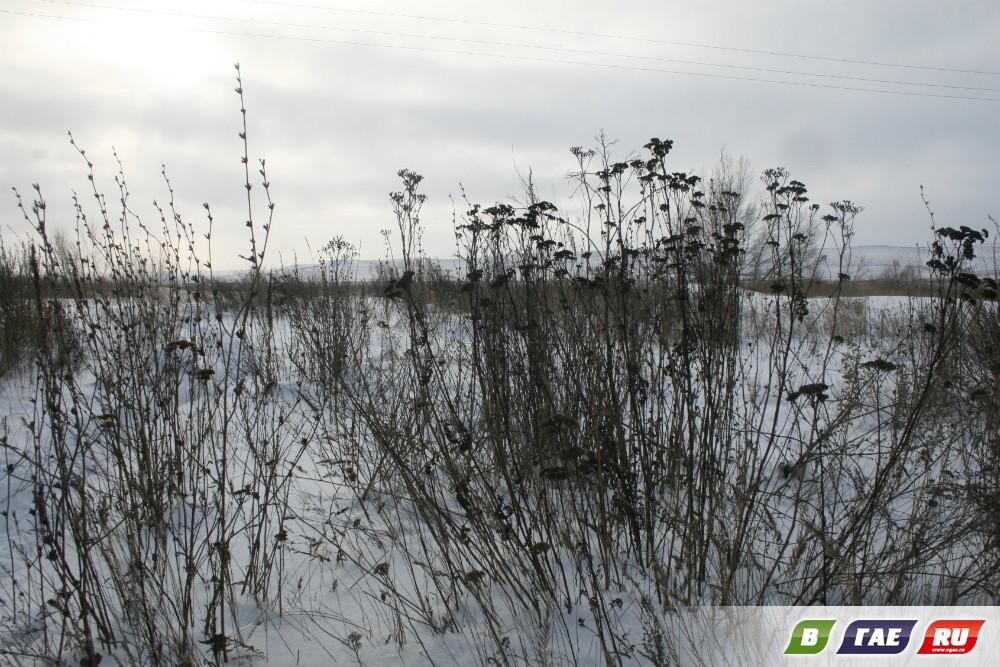 ЗА ПЕТУХОМ!-2 Новогодний репортаж