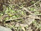 В Гае зазеленела трава