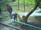 Алексей и Максим Будицкие предстанут перед судом