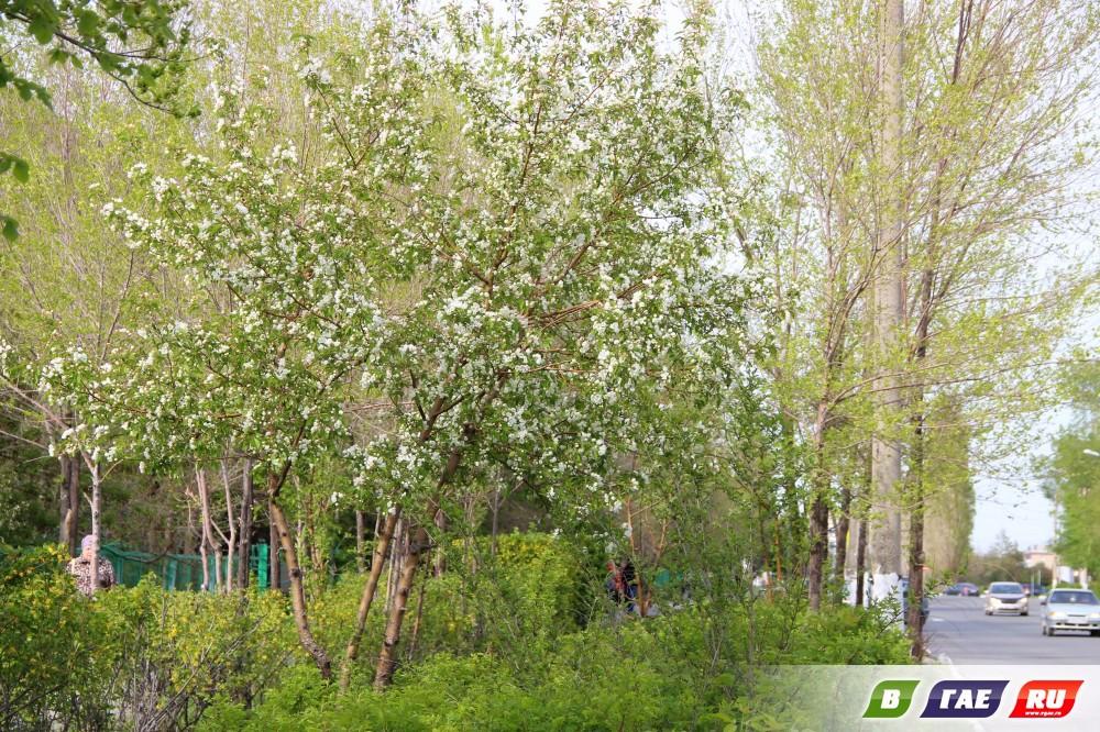 Майские фото зеленого Гая