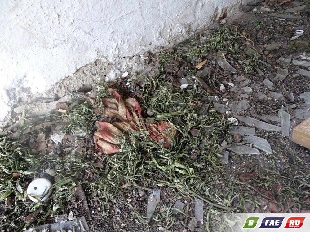 Как выглядит гайский наркопритон