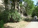 На Орской опилили большое количество зелёных ветвей