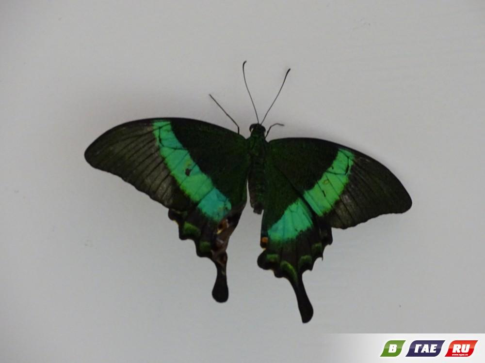 Внимание! На выставку завезли новые виды тропических бабочек (0+)
