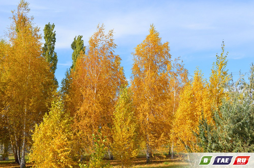 В Гае царствует золотая осень
