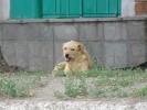 Бродячих собак отловят, а трупы утилизируют