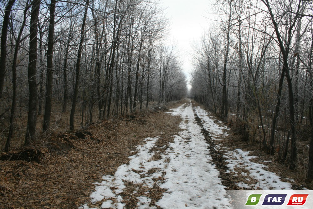 Макушка ноября