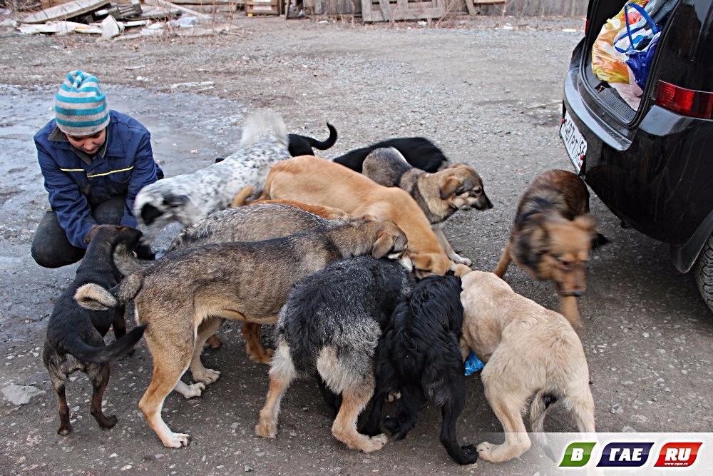 Привет! У нас живет 110 кошек и собак