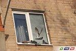 Гайские синантропы могут постучаться  в окно