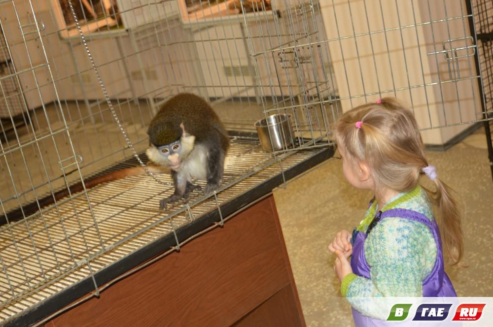 В Гае открылась выставка живых обезьян и рептилий «Джунгли-парк» (0+)