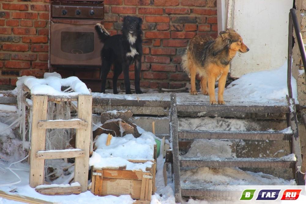 Жизнь собачья. В приюте  - чрезвычайная ситуация