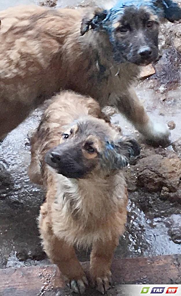Собак в приюте облили краской и маслом