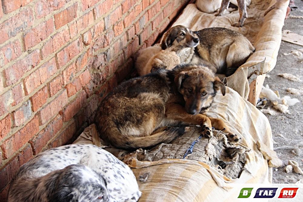 Картинки с бездомными животными для сайта